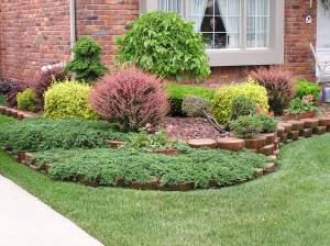 shrubs and plants