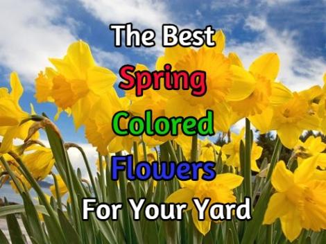 spring flower colors