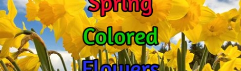 spring flower colors